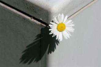 (Bart Hofland) Edge of shadows (Small)