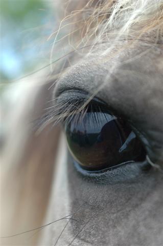(emma) eyelashes Winner (Small)