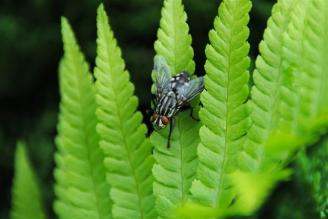 (Klaudia T)insect (Small)