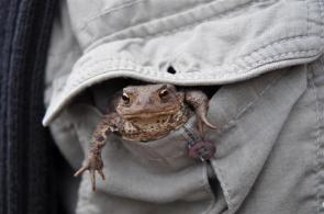 (Krzysztof) Frog in pocketgroot_1 (Small)