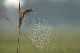(Marc) Wold Wide Spiderweb.com groot_1 (Small)