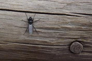 (Marcin) Insect (Small)