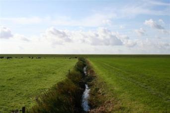(Michiel) Some grass is just greener (Small)
