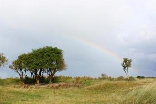 (Nadja) Rainbow on savanna (Small)
