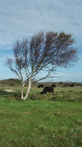 (Zuzia)tree and cow (Small)